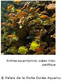 Palais de la Porte Dorée Aquarium
